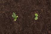 pohled shora malé rostliny se zelenými listy, ochrana přírody koncept