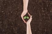 oříznutý pohled páru držícího terénu s rostlinou v rukou, ochrana přírody koncept
