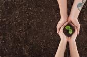 Fényképek vágott pár tartja a kezet, védi a természet koncepció a zöld növény föld látképe