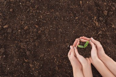 cropped view of couple holding ground with small plant in hands, protecting nature concept