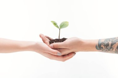 cropped view of couple holding ground with plant in hands isolated on white