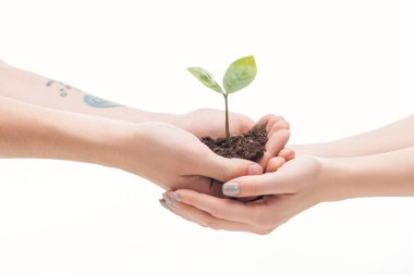 cropped view of couple holding ground with small plant in hands isolated on white