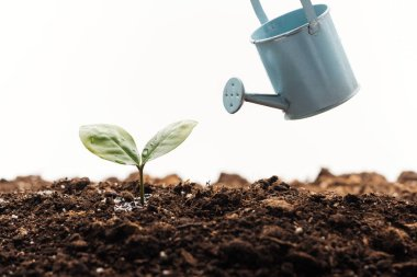 Toy watering can near small plant in ground isolated on white stock vector