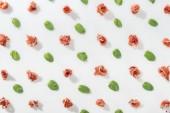 felülnézet ízletes prosciutto közelében zöld bazsalikom levelek, a fehér háttér