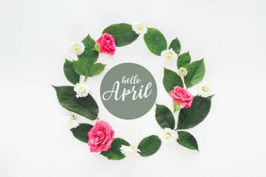 top view of circular composition with green leaves, roses and chrysanthemums on white background with hello april illustration