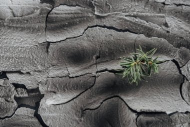 dried cracked ground surface with young green plants, global warming concept