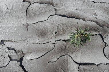 Genç yeşil bitkiler kırık arazi yüzeyi, küresel ısınma konsepti
