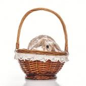 cute bunny sitting in wicker basket on white