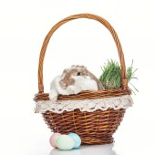 easter eggs near wicker basket with cute bunny and grass on white