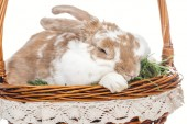 easter bunny sitting in wicker basket with grass isolated on white