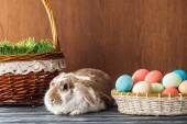 Fotografia simpatico coniglio vicino alla ciotola con le uova di Pasqua sulla tavola di legno e cestino di vimini con erba di primavera