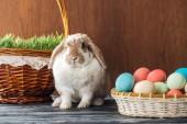 Fotografia coniglio carino vicino a canestro di vimini con erba e ciotola con le uova di Pasqua sulla tavola di legno