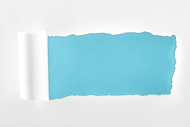 Ripped textured white paper with rolled edge on blue background stock vector