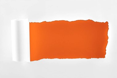 tattered textured white paper with rolled edge on deep orange background