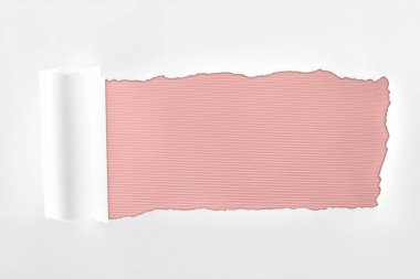 Tattered textured white paper with rolled edge on pink background stock vector
