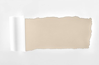 Tattered textured white paper with rolled edge on ivory background stock vector