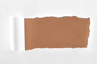 Tattered white paper with rolled edge on brown background stock vector