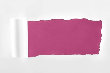 Ragged textured white paper with rolled edge on crimson background stock vector