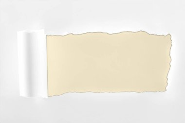 Ragged textured white paper with rolled edge on ivory background stock vector
