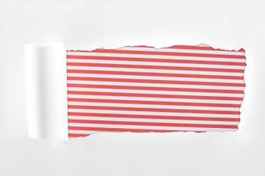 Ragged textured white paper with rolled edge on red striped background stock vector