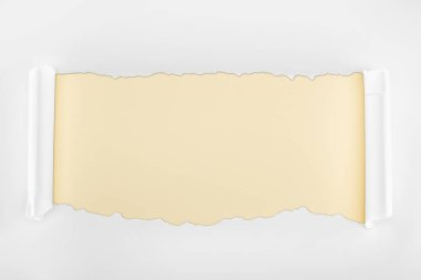 Ripped textured white paper with curl edges on beige background stock vector