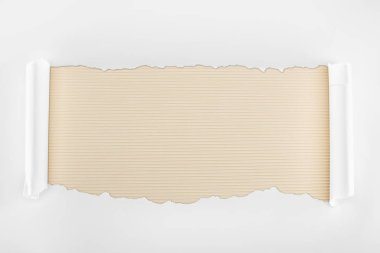 Ripped white textured paper with curl edges on ivory striped background stock vector