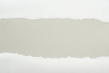Ripped white textured paper with copy space on grey background stock vector