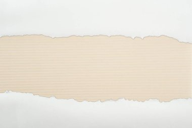 Ripped white textured paper with copy space on ivory striped background stock vector