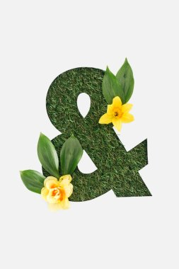 Top view of cut out Ampersand sign on green grass background with leaves and yellow daffodils isolated on white stock vector