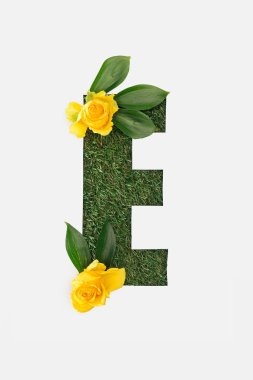 Top view of cut out E letter on green grass background with leaves and yellow daffodils isolated on white stock vector