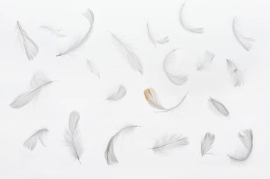 seamless background with grey faint feathers isolated on white