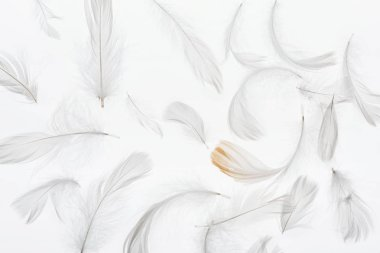 seamless background with grey feathers isolated on white