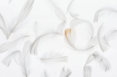 seamless background with grey lightweight faint feathers isolated on white