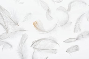 seamless background with grey faint soft feathers isolated on white