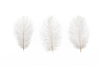 grey fluffy lightweight three feathers isolated on white