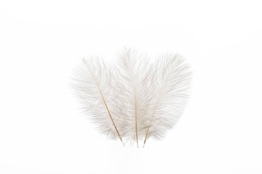 grey fluffy faint three feathers isolated on white