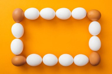 Top view of whole white and brown organic chicken eggs arranged in square frame on bright orange background with copy space stock vector