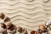 pohled na písčité pozadí s hladkými vlnami, mušle a prostor pro kopírování