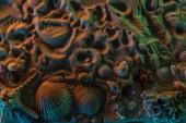pohled na různé mušle, hvězdice, korály a jejich stopy na písku s oranžovými, zelenými a modrými světly