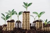 monete doro con foglie verdi e terreno isolato su bianco, concetto di crescita finanziaria