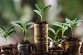 stříbrné a zlaté mince se zelenými listy a půdou, koncept finančního růstu