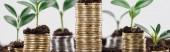 panoramatický záběr mincí se zelenými listy a půdou izolovaný on White, koncept finančního růstu