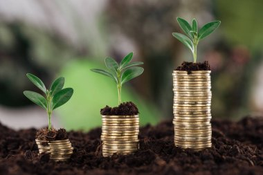 Selective focus of arranged golden coins with green leaves and soil, financial growth concept stock vector