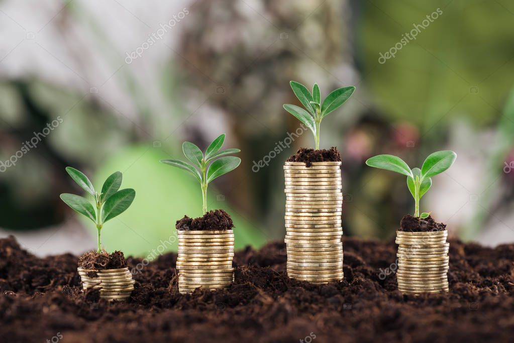 selective focus of arranged golden coins with green leaves and soil, financial growth concept