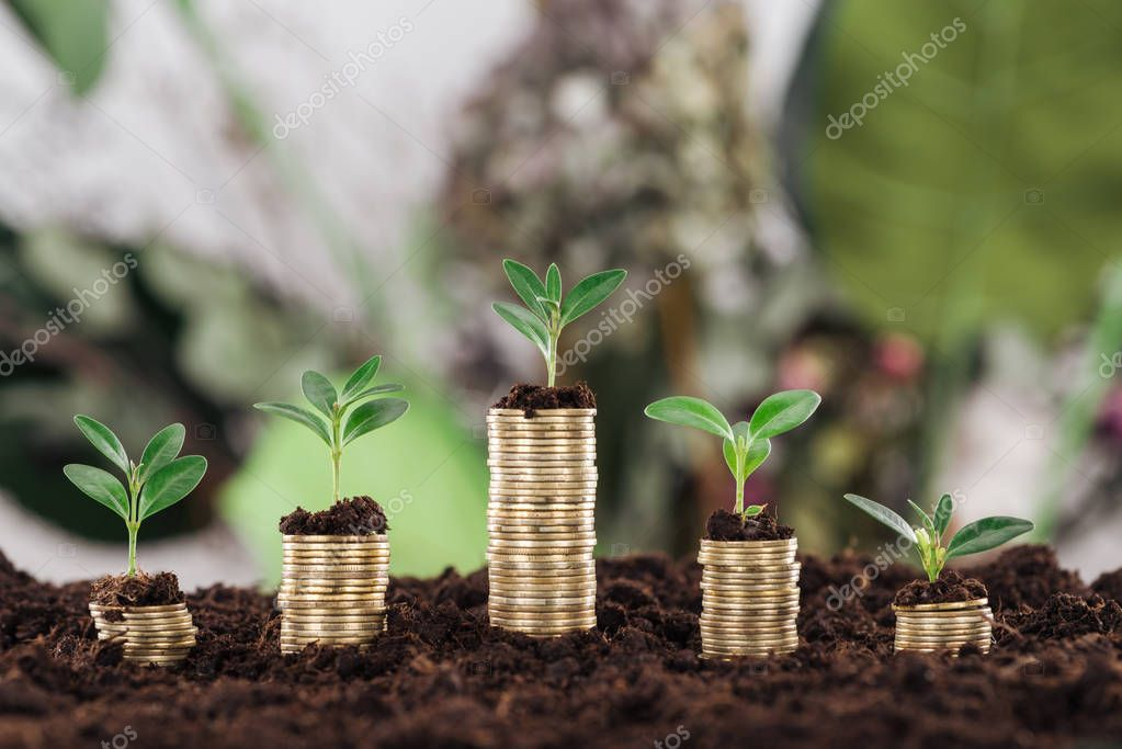 arranged golden coins with green leaves and soil, financial growth concept