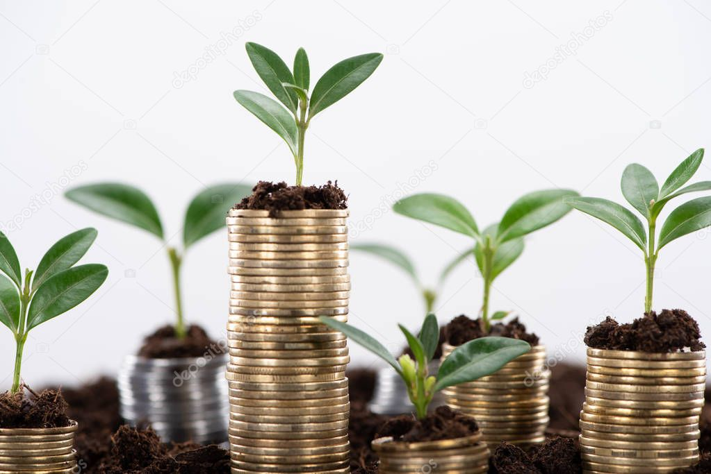 golden coins with green leaves and soil Isolated On White, financial growth concept