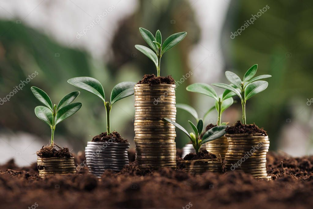 silver and golden coins with soil and green leaves, financial growth concept