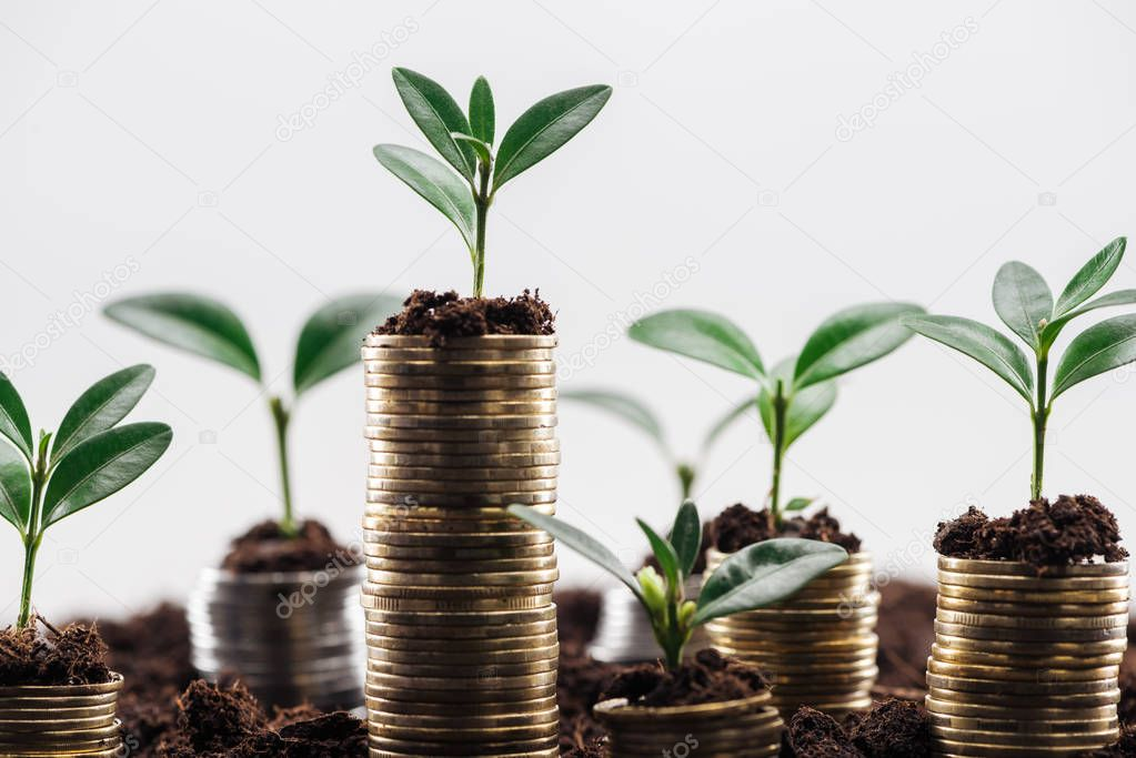 selective focus of coins with green leaves and soil Isolated On White, financial growth concept