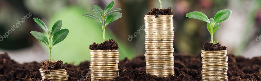 panoramic shot of golden coins with green leaves and soil, financial growth concept