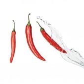 peperoncino rosso piccante brillante con spruzzo dacqua limpida isolato su bianco